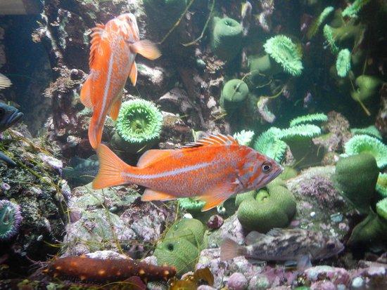 Vancouver Aquarium: duo