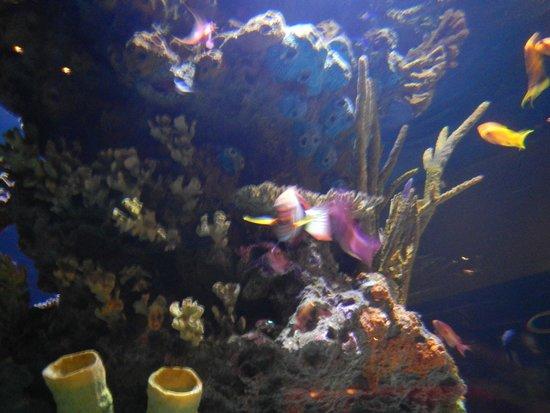 Vancouver Aquarium: .