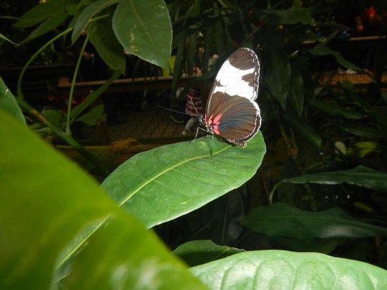 Vancouver Aquarium: butterfly