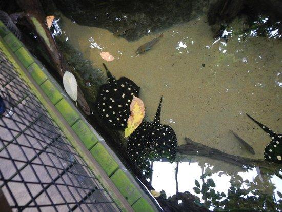 Vancouver Aquarium: rays