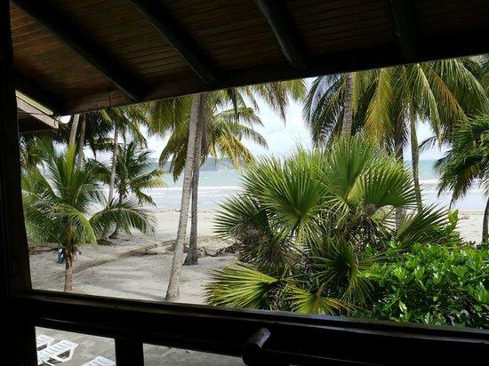 Samara Tree House Inn: Out the front window