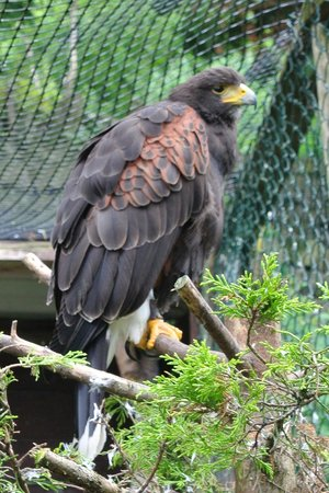Bodafon Farm Park: Birds of Prey