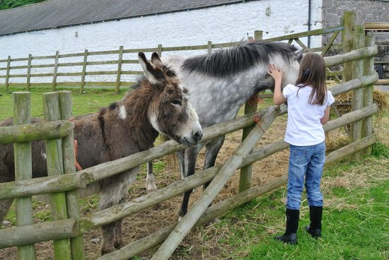 Bodafon Farm Park: Feeding the horses