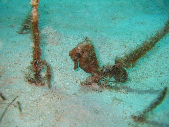 Scuba Steve's Diving Ltd.: St Lucia Starfish