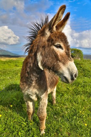 Skye Shepherd Huts: The Two Donkeys will keep you Entertained