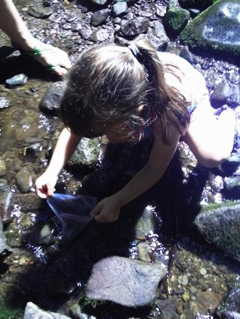 A Walk in the Woods : Catching Salamanders