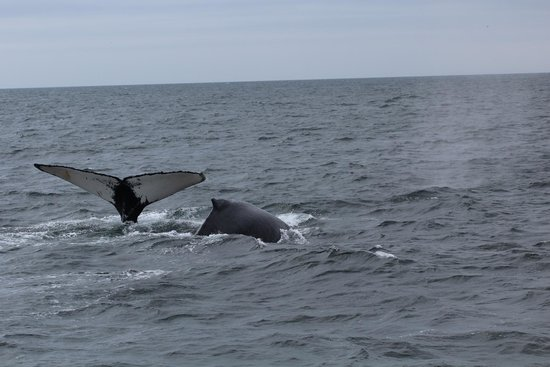 New England Aquarium Whale Watch : Pic 2