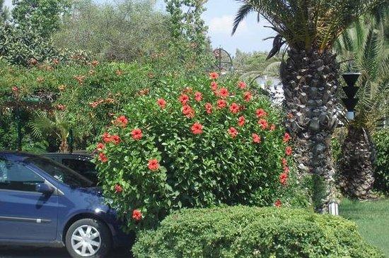 Verginia Sharm Resort: 6