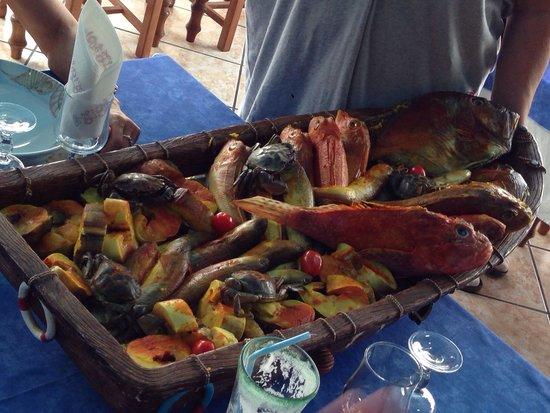 Sausset-les-Pins, França: Les poissons pour la soupe.