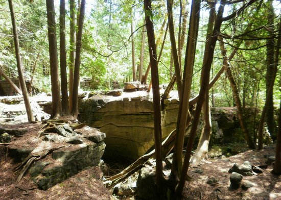 Rockwood Conservation Area: Trail view