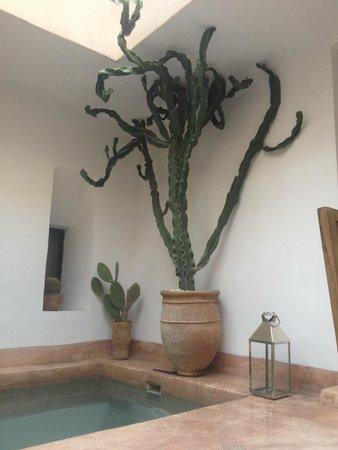 Riad de Vinci: cactus dans le patio