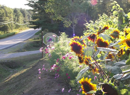 Catherine Hill Winery : Summer blooming