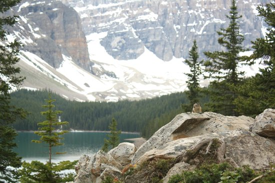 Moraine Lake: Squirrel!
