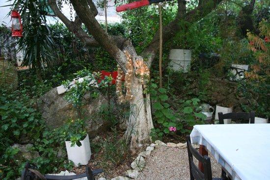 Polyphemus Restaurant: Polyphemus Garten 8