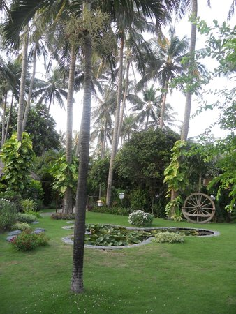 Bamboo Village Beach Resort & Spa : Garden