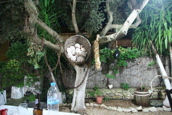 Polyphemus Restaurant: Polyphemus Garten 2