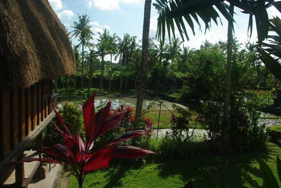Agung Raka Resort & Villas : Blick auf die Reisterrassen