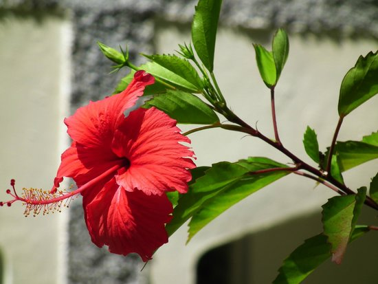 Biyadhoo Island Resort: Flower in the grounds