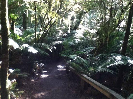 Mait's Rest: Lush Rain Forest Area - Ferns abound