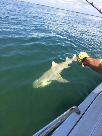 Outcast Sport Fishing: Matt S. catching Lemon Shark with awesome Capt. Chip