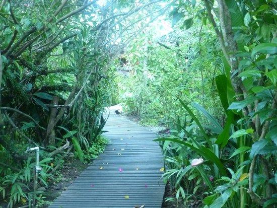Jacaranda Hotel and Jungle Garden: walk towards reception from apartment