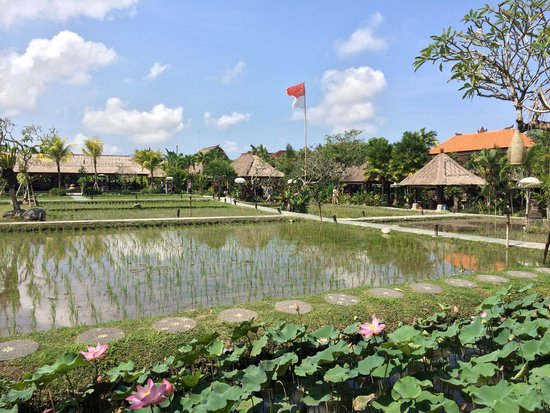Bebek Tepi Sawah Villas & Spa: View from the restaurant