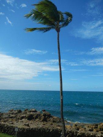 The Condado Plaza Hilton: ocean view