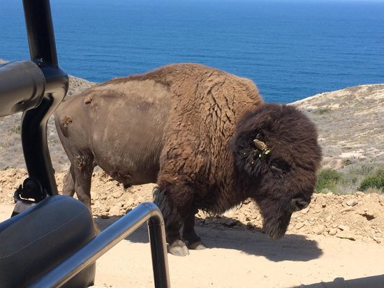 Cape Canyon Expedition: A bison came right up to the Hummer!