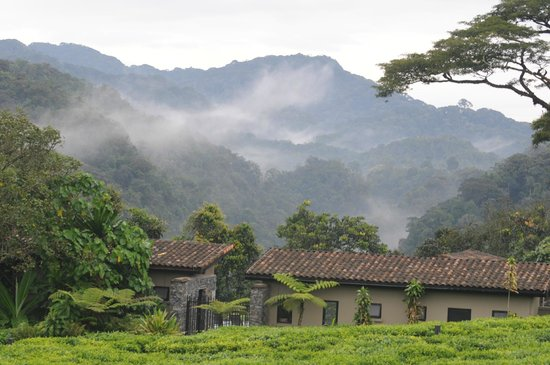 Nyungwe Forest Lodge: Nyungwe ForestLodge