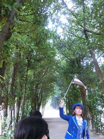 Bise Fukugi Tree Road : 並木道
