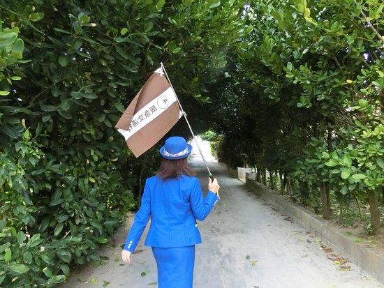 Bise Fukugi Tree Road : ガイドさん