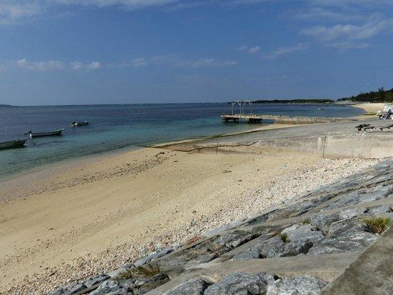 Bise Fukugi Tree Road : 海岸に出てぐるっと回って戻る