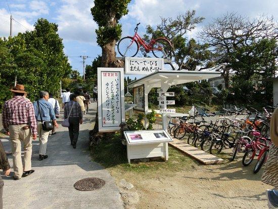 Bise Fukugi Tree Road : レンタサイクル