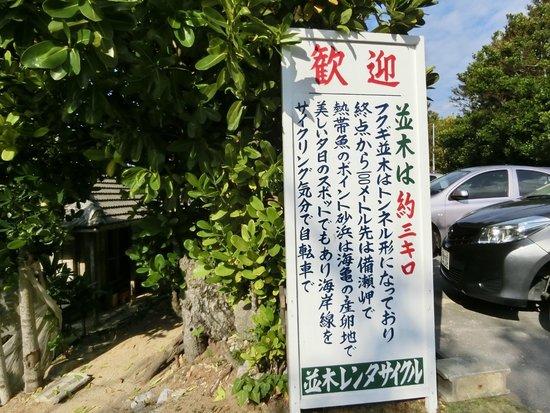 Bise Fukugi Tree Road : 並木の説明
