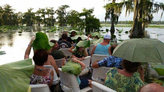 Cajun Country Swamp Tours: .