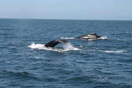 Blue Ocean Whale Watch: Family of whales