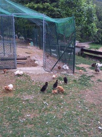Locanda Le Due Querce: e gli animali...