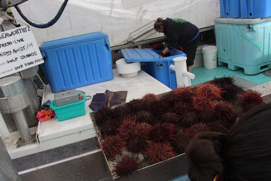Steveston Heritage Fishing Village: Sea urchin vendor