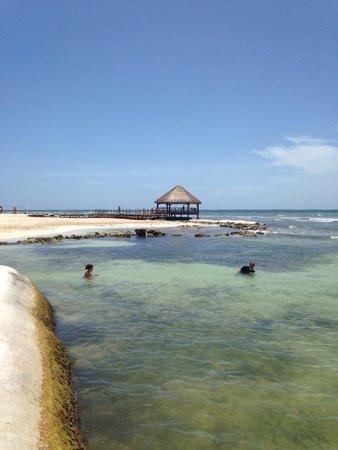 Secrets Silversands Riviera Cancun : Ocean