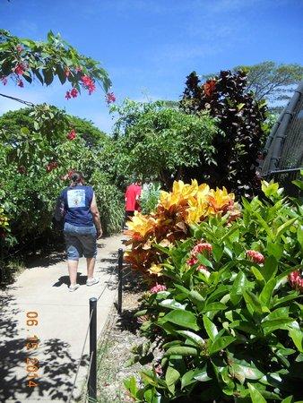 Honolulu Zoo : beautiful walkways