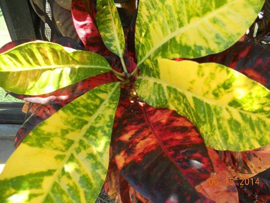 Honolulu Zoo : colorful plants