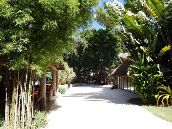 Bluewater Maribago Beach Resort : Resort ground leading to the beach.