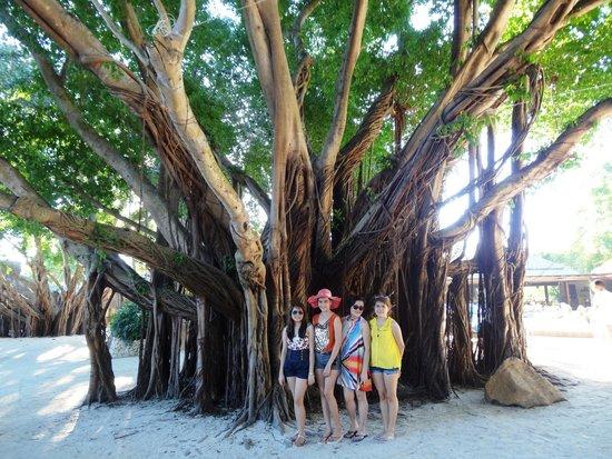 Bluewater Maribago Beach Resort: Lush root-drooping tree in resort ground.