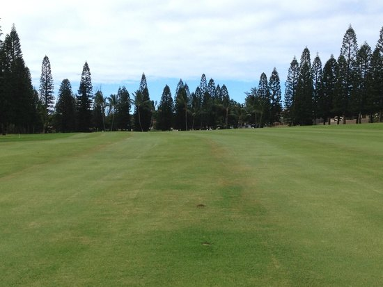 Pukalani Country Club: The Norfolk pine outline this hole. It's beautiful.