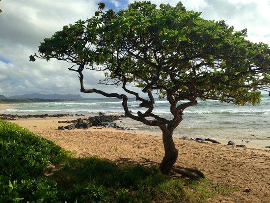 Kauai Beach Villas : Beach at the Villas
