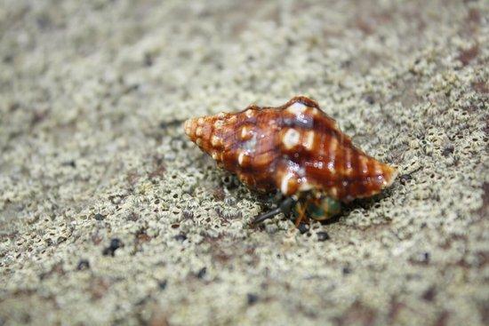 Hostel Clandestino: Hermit Crab