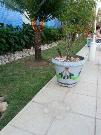 Brisa da Praia Hotel: Muitos pássaros na área da piscina, muito lindo!