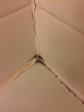 The Westin New York Grand Central: mold infested bathroom