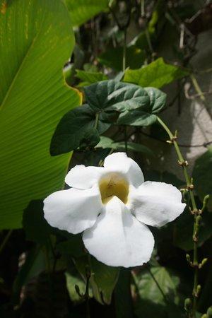 Maca Villas & Spa: Garden
