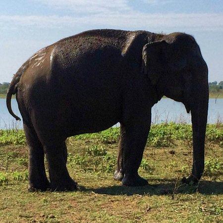Mahoora Tented Safari Camp - Udawalawe: Safari sighting!
